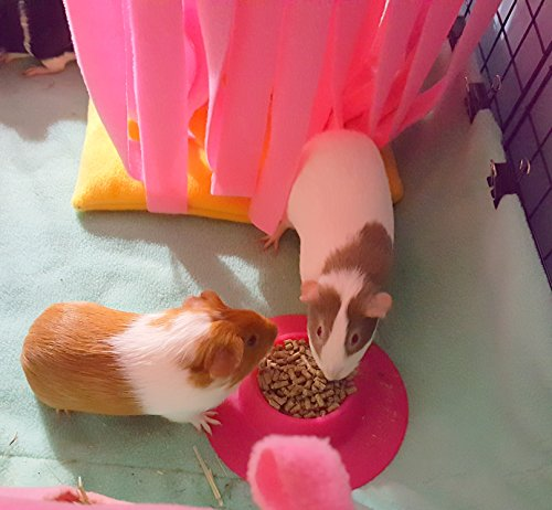 STAYbowl-Tip-Proof-Ergonomic-Pet-Bowl-for-Guinea-Pig-and-Other-Small-Pets-14-Cup-Small-Size-Fuchsia-Pink-0-1