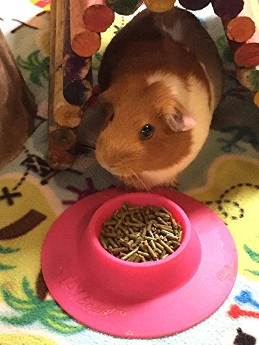 STAYbowl-Tip-Proof-Ergonomic-Pet-Bowl-for-Guinea-Pig-and-Other-Small-Pets-14-Cup-Small-Size-Fuchsia-Pink-0-2