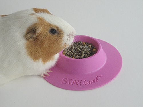 STAYbowl-Tip-Proof-Ergonomic-Pet-Bowl-for-Guinea-Pig-and-Other-Small-Pets-14-Cup-Small-Size-Lilac-Purple-0-0