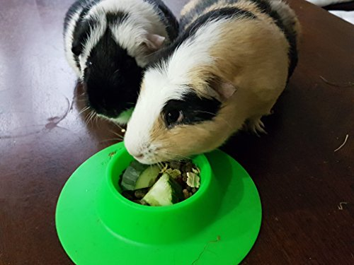 STAYbowl-Tip-Proof-Ergonomic-Pet-Bowl-for-Guinea-Pig-and-Other-Small-Pets-14-Cup-Small-Size-Spring-Green-0-2