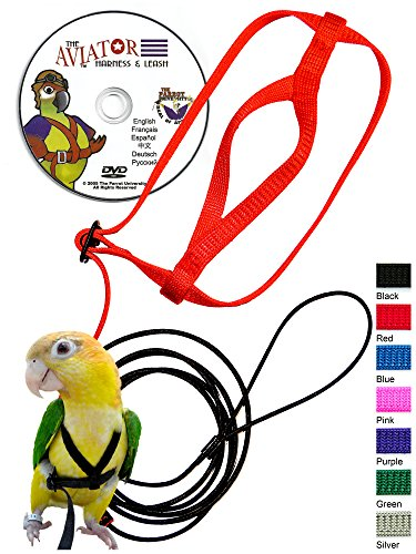 The-AVIATOR-Pet-Bird-Harness-and-Leash-0